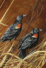 Toland Home Garten-Amsel mit roten Flügeln, 28 x