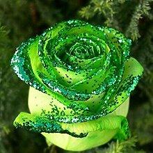 Tomasa Samenhaus- 100 Stück Regenbogen Rose