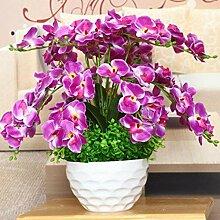 Tomasa Samenhaus-100pcs Phalaenopsis Orchidee,