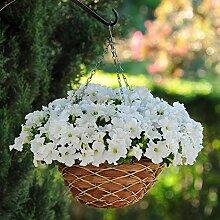 Tomasa Samenhaus-100pcs Rare Petunien Blumensamen