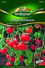 Tomaten Ampel- Tumbling Tom Re - Solanum