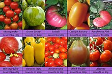 Tomatensamen Raritäten, 10 alte Sorten mix, Eier