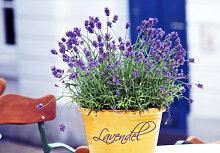 Topf-Dekoration - Topfdesign Lavendel