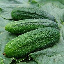TOPmountain Gurkensamen,köstliche Gemüsesamen