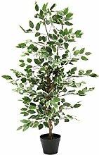 Tradix GmbH & Co. KG Deko Pflanze Ficus Benjamini