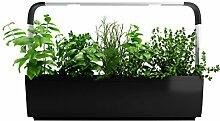 Tregren LED T12 Kitchen Garden, schwarz, 64,5 x