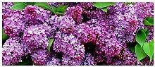 Treppenmatten 3D Pflanze Blumen Druck Rechteck Gummi rutschfeste Matte Teppich Home Küche Dekoration 24 * 60cm / Packung von 2 , 8