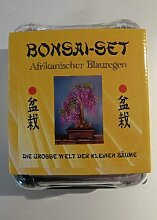 Tropica - Bonsai-Set - Afrikanischer Blauregen mit