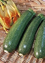 Tropica - Gemüse - Zucchini - Defender F1 (Curcurbita pepo) - 10 Samen