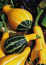 TROPICA - Kürbis - Poires bicolores (Cucurbita pepo) - 15 Samen