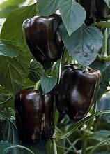 Tropica - Paprika / Chilli - Marona (Capsicum annum) - 5 Samen - Block-Paprika