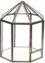 Tubayia Geometrisches Terrarium Box Sukkulente