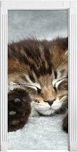 Türaufkleber Baby-Katze, rote Bettdecke East