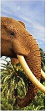 Türaufkleber Elefant Elfenbein Afrika Palmen Tür