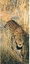 Türaufkleber Leopard