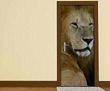 Türaufkleber Löwen Afrika Raubkatze Löwe Tür