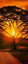 Türtapete Afrika Sonnenuntergang TT001 90x200cm