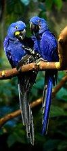 Türtapete Blaue Aras TT408 90x200cm Tapete Afrika