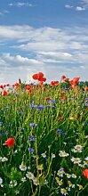 Türtapete Blumenwiese TT376 90x200cm Tapete Feld