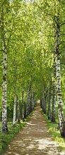 Türtapete, Fototapete Birch, Birkenweg 92x220cm