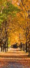 Türtapete Herbstallee TT263 90x200cm Tapete