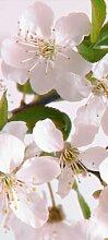 Türtapete Kirschblüten TT006 90x200cm Tapete