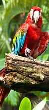 Türtapete Papagei TT407 90x200cm Tapete Afrika