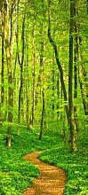 Türtapete Waldpfad TT244 90x200cm Tapete Wald