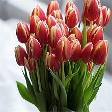 Tulpen Zwiebeln Zierpflanzen MehrjäHriges Kraut