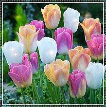 Tulpenzwiebeln,Eine magische Pflanze mit