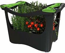 U-greeny Pflanzbox Hochbeet Gemüsebeet