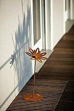 Unbekannt Blume Blüte Margerite auf Platte