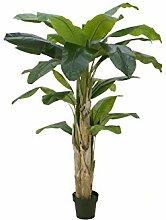 Unbekannt EUROPALMS Bananenbaum, 170cm