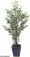 Unbekannt Ficus-Benjamini deluxe/Topf
