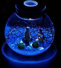 Unbekannt Glasflasche Glas Hydrokultur