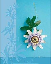Unbekannt Neue imagesaffiche 40x 50cm Blume