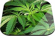Untersetzer Hanfpflanze B x H: 10cm x 10cm - 6er Pack von Klebefieber®