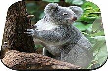 Untersetzer Koala B x H: 10cm x 10cm - 12er Pack von Klebefieber®
