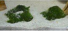 Unterwassergras, Bodendecker für Aquarien und Gartenteiche