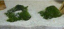 Unterwassergras, Frosthart, Unterwasserpflanze gegen Algen im Aquarium und im Teich - Die Waffe gegen Algen !!!