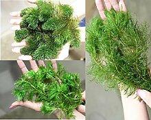 Unterwasserpflanzen Sortiment 50 Pflanzen Wasserfeder Teichpflanzen Teichpflanze Teich
