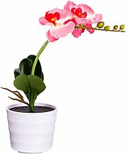 Uonlytech Solar Schmetterling Orchidee Blossom LED