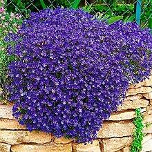 UPSTONE Gartensamen -30 stücke Selten
