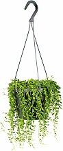 Urban Green | Hängende Pflanze gemahlenes Kraut