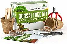 Urban Sprout Bonsai Baum Anzuchtset - Züchten Sie