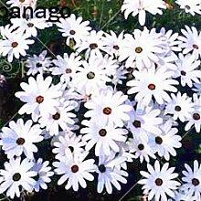 vegherb 1: 100 Stück/Beutel Schöne Blumensamen