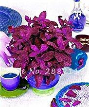 vegherb 1: 200 Stück Red Spearmint Mint Samen