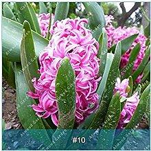 vegherb 10: Zlking 10 Art von Hyazinthefühler