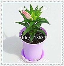 vegherb 100 PC/Beutel Pflanzen Topf Lily