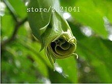 vegherb 14: Datura Blumensamen Tropische